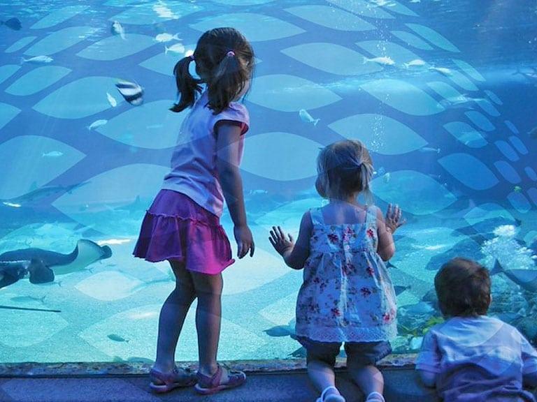 Istanbul Aquarium Kids