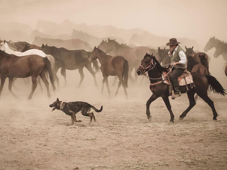Wild Horses Cappadocia Name
