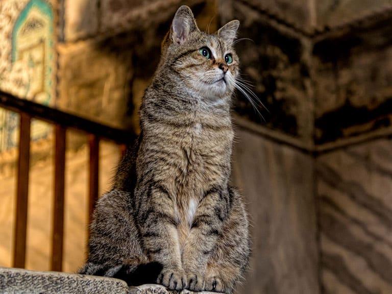 Hagia Sophia's famous cat Gli