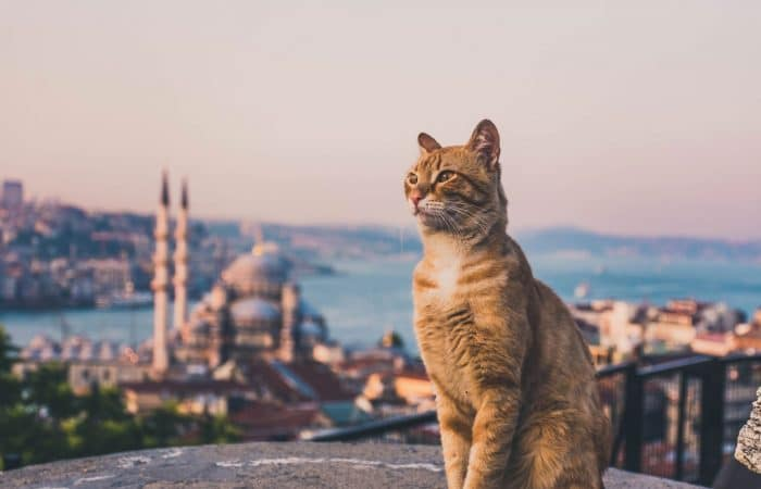 Why Cats Rule the Streets of Istanbul