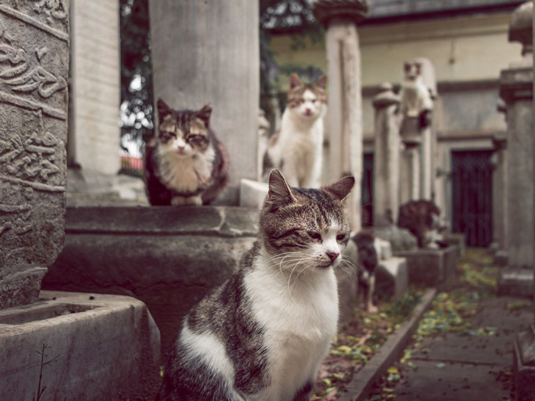 Why Are There So Many Cats in Istanbul